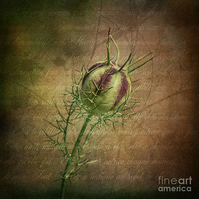 Tendrils Photograph - Fey Poppy Magic by Terry Rowe