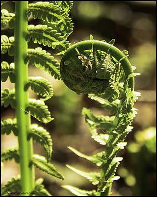 Spider Photograph - Fiddlehead Spider Web by LeeAnn McLaneGoetz McLaneGoetzStudioLLCcom