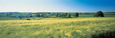 Field Near Barnstaple, North Devon Print by Panoramic Images