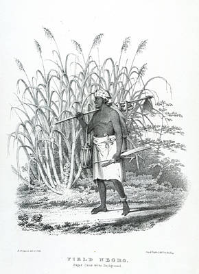 Field Negro Print by British Library