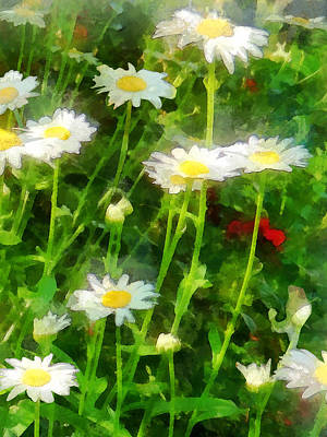 Floral Photograph - Field Of Daisies by Susan Savad