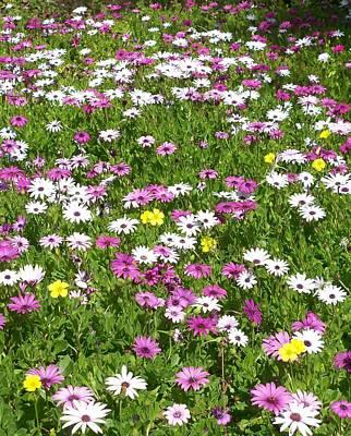 Field Of Flowers Print by Deborah  Montana