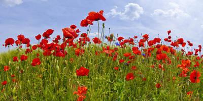 Field Of Red Poppies Print by Melanie Viola