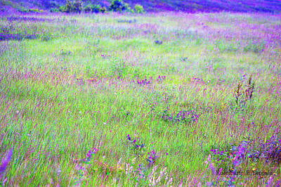 Extra Large Mixed Media - Field Of Wildflowers by Rosemarie E Seppala