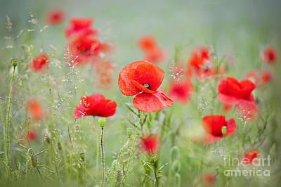 Field Poppies Print by Jacky Parker