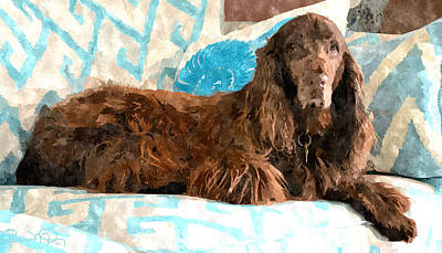 Animals And Earth Photograph - Field Spaniel Couch Potato by Susan Molnar