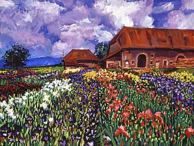 Fields Of Iris Print by David Lloyd Glover