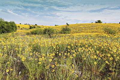 Fields Of Yellow Print by Charrie Shockey
