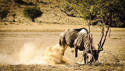 Grapple Photograph - Fight The Bush by Andy-Kim Moeller