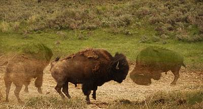 Yellowstone Mixed Media - Fighting Buffalo by Dan Sproul