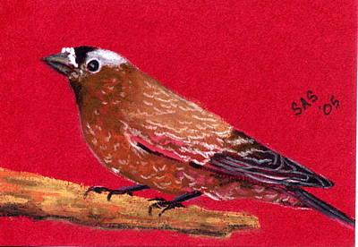 Animal Pastel - Finch 3 by Sherri Strikwerda