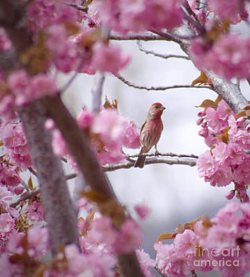 Wild Orchards Photograph - Finch Frame by Andrea Goodrich