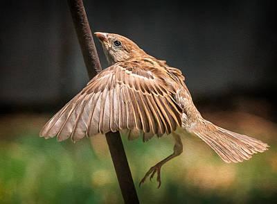 Finch Photograph - Finch In Morning Light by Rick Barnard