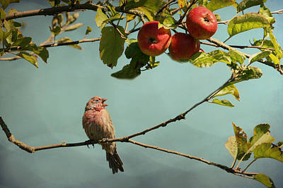 Finch Mixed Media - Finch Singing In An Apple Tree by Peggy Collins