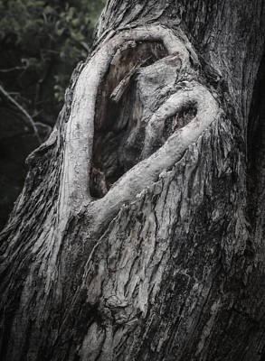 Hollow Photograph - Finding Love by Joan Carroll