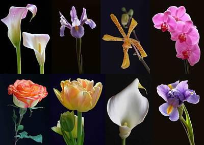 Fine Art Flower Photography Print by Juergen Roth