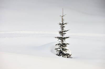 Fir Tree And Lots Of Snow In Winter Kleinwalsertal Austria Print by Matthias Hauser