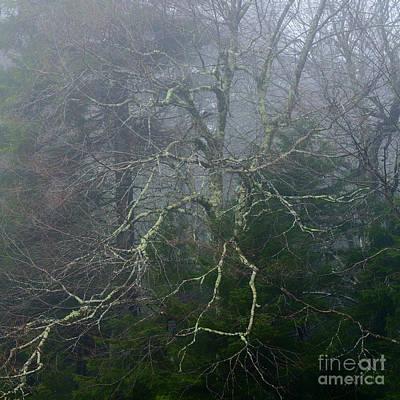 Genus Photograph - Fire Cherry In Mist by Thomas R Fletcher