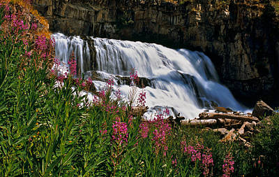 Fireweed Blooms Along The Banks Of Granite Creek Wyoming Print by Ed  Riche