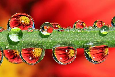 Flowers Photograph - Firey Drops by Gary Yost