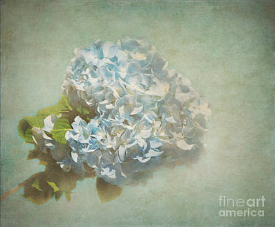 First Hydrangea - Texture Print by Bob and Nancy Kendrick