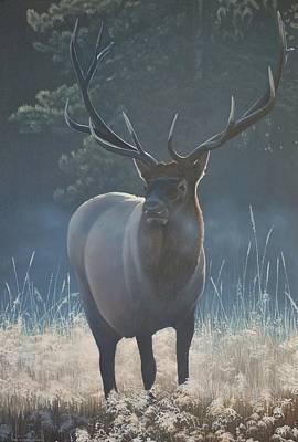 First Light - Bull Elk Print by Peter Mathios