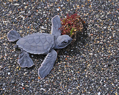 Small Turtle Photograph - First Light by Tony Beck