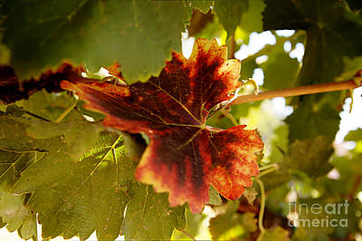 First Signs Of Autumn Print by Dry Leaf