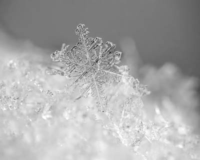Crystal Photograph - First Snowflake by Rona Black