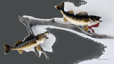 Large Mouth Bass Digital Art - Fish Mount Set 06 B by Thomas Woolworth