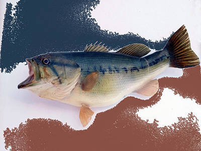 Large Mouth Bass Digital Art - Fish Mount Set 09 C by Thomas Woolworth