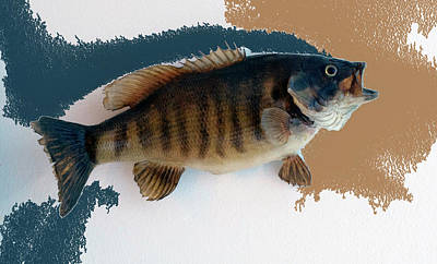 Large Mouth Bass Digital Art - Fish Mount Set 10 Cc by Thomas Woolworth