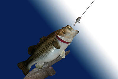 Large Mouth Bass Digital Art - Fish Mount Set 13 B by Thomas Woolworth