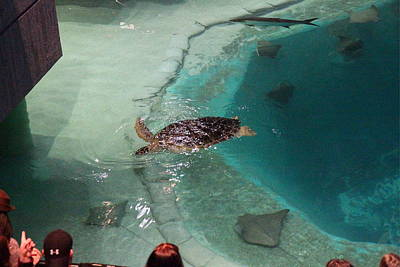 Baltimore Photograph - Fish - National Aquarium In Baltimore Md - 121210 by DC Photographer