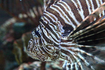 Fish - National Aquarium In Baltimore Md - 121264 Print by DC Photographer
