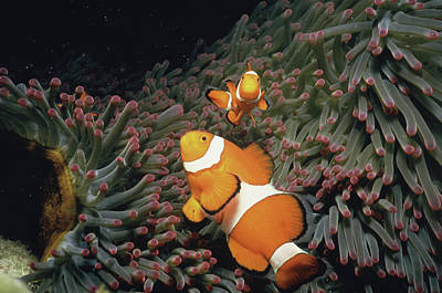 Fish Undersea, Okinawa Prefecture, Japan Print by Panoramic Images