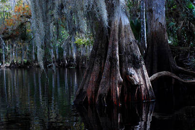 Fisheating Creek Photograph - Fisheating Creek 23 by Carol Kay