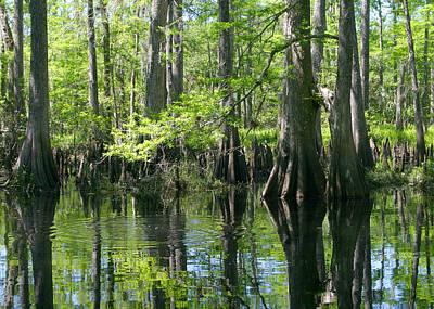 Fisheating Creek Photograph - Fisheating Creek by Karen Lindquist