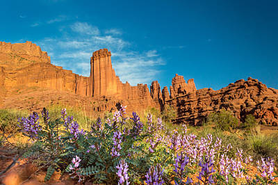 Red Rock Photograph - Fisher Towers Evening by Michael J Bauer