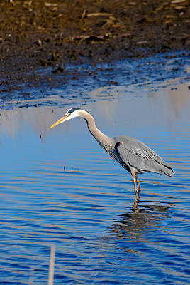 Blue Herron Photograph - Fishing by Gary Wightman