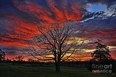 Flaming Oak Sunrise Print by Reid Callaway