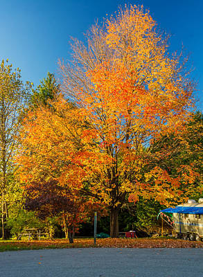 Fall Photograph - Flaming by Steve Harrington