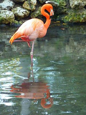 Flamingo Print by Adrienne Franklin