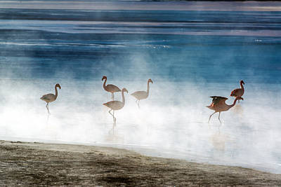 Pink Flamingo Nature Photograph - Flamingoes In Bolivia by Jess Kraft