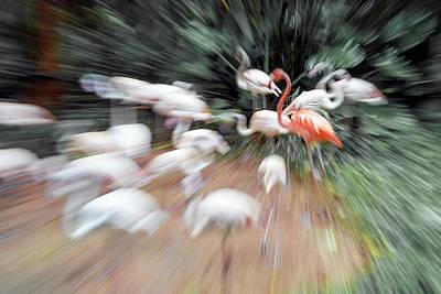 Waterbirds Photograph - Flamingos by Pan Xunbin