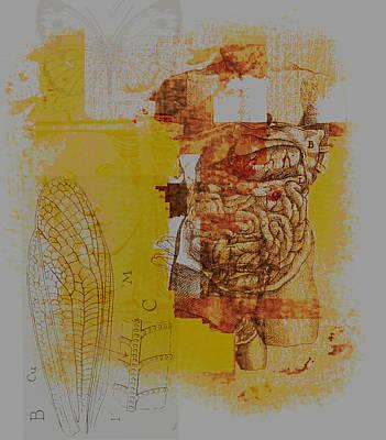 Internal Organs Digital Art - Flawless by Jeff Burgess