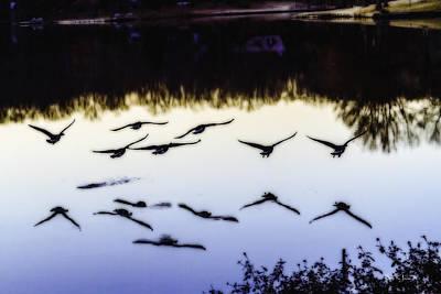 Landscape Photograph - Flight by Barry Jones
