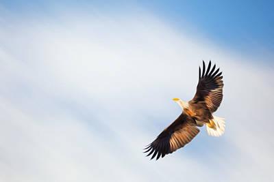 Birds In Flight Photograph - Flight by Bill Wakeley