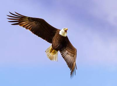 Florida Photograph - Flight Of The Eagle by Mark Andrew Thomas