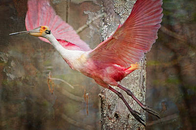 Evangeline Photograph - Flight Of The Roseate Spoonbill by Bonnie Barry